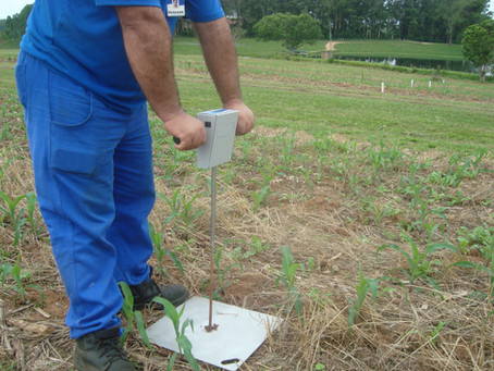 Plantas de cobertura são aliadas no manejo da compactação do solo