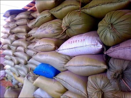 Missão de arrozeiros viaja a Gana em busca de novos mercados