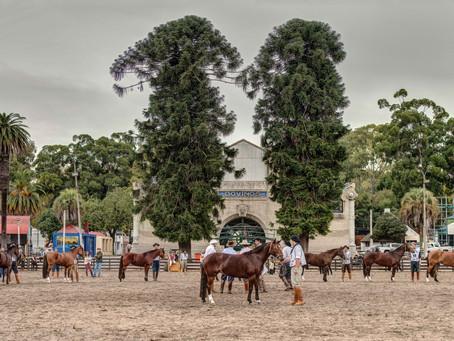 Ciclo do Freio de Ouro chega ao território uruguaio nesta semana