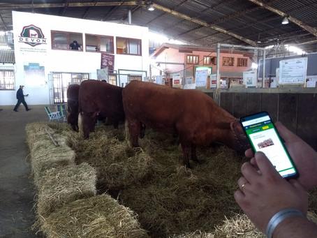 Primeiro aplicativo de compra e venda na pecuária de corte é lançado na Expointer