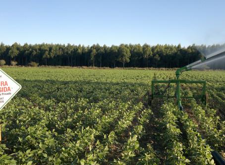 Eventos do agronegócio gaúcho pautam tema do seguro rural