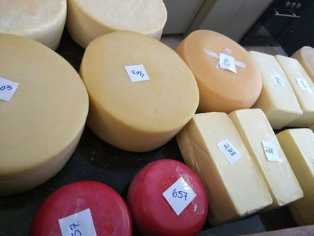 Análise sensorial auxilia na produção de queijos de qualidade
