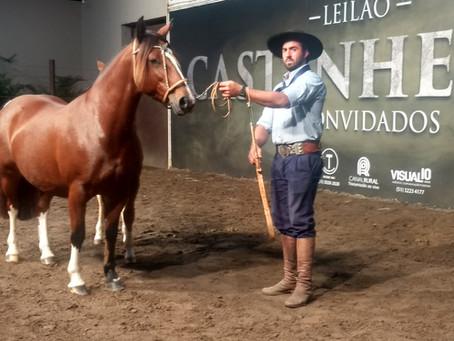 Leilões da raça Crioula na Fenasul registram pista limpa e boas médias