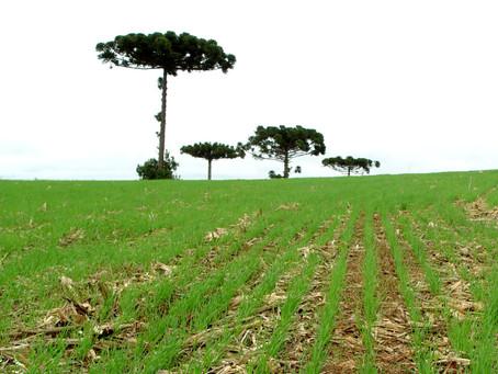 Agricultores precisam adotar cuidados após chuva em excesso