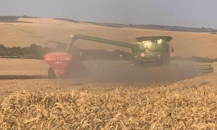 Trigo encerra colheita no Rio Grande do Sul com crescimento de 25,4%