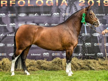 Cavalo Crioulo constrói seu espaço e realiza Passaporte de Uberaba