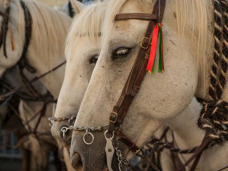 Posicionamento do Simvet/RS sobre Regulamentação dos Esportes Equestres