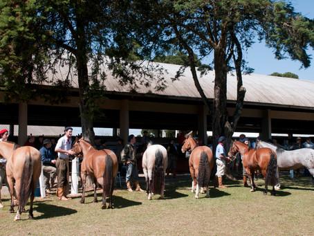 Lagoa Vermelha recebe Exposição Passaporte do Cavalo Crioulo