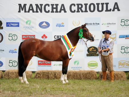 Égua de cabanha de Pelotas é o grande destaque do Mancha Crioula