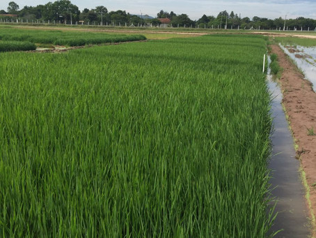 Vitrines tecnológicas apresentam novidades para os produtores