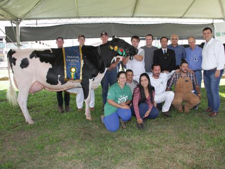 Vaca Constentation é bicampeã da Expoleite Fenasul