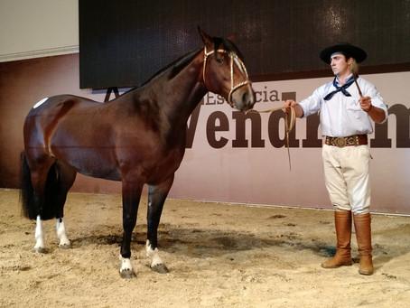 Estância Vendramin ultrapassa R$ 2,53 milhões em vendas