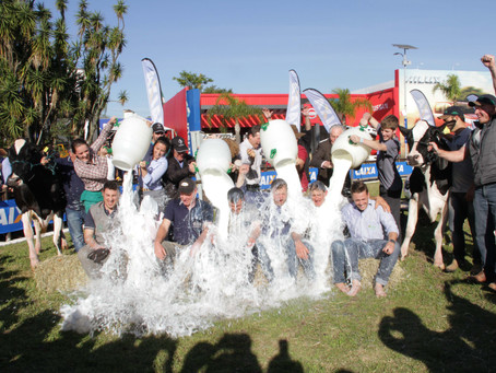 Conhecidas as campeãs da Expointer do concurso leiteiro da raça holandesa