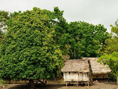 Posição do STF sobre demarcações de terras indígenas pode ser alterada