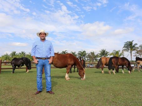 Expozebu vai receber Exposição Morfológica do Cavalo Crioulo