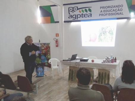 Pitaya vira opção de cultivo para grandes e pequenos produtores