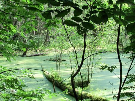 Agricultura desempenha papel fundamental na preservação de florestas e da água