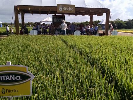 Fórmula da RiceTec bate recorde de produtividades nas lavouras do Sul