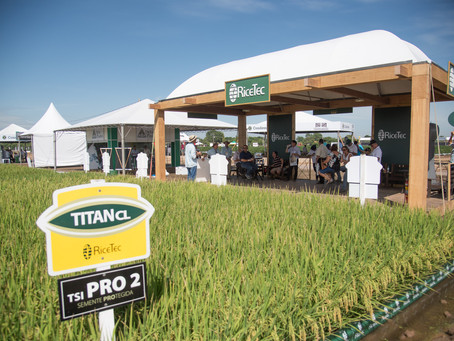 RiceTec reformula plano de operações de produção de sementes no Mercosul