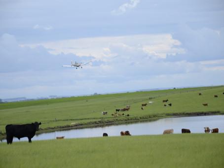 Investidores em propriedades rurais precisam adotar cautelas na hora da compra
