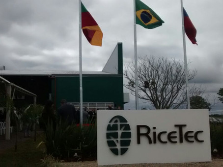 RiceTec investirá mais de R$ 20 milhões no Sul do Brasil