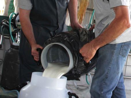 Gadolando prega garantia de preço no leite para o produtor