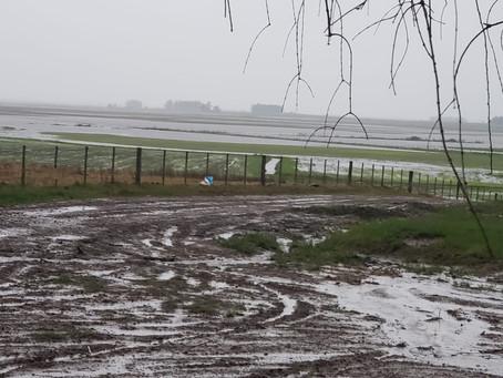 Federarroz cobra soluções para produtores atingidos por chuvas