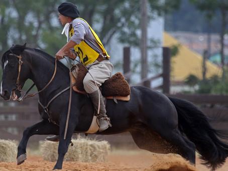 Cavalo Crioulo é destaque em evento em Ponta Grossa