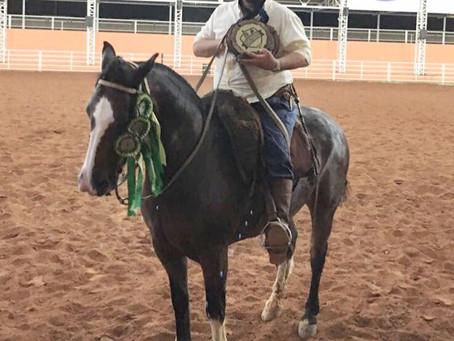 Cavalo Crioulo tem resultado positivo no Rio de Janeiro