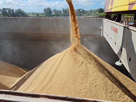 Live vai abordar esclarecimentos sobre as exportações de arroz