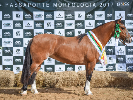 Araranguá seleciona animais para a Morfologia na Expointer