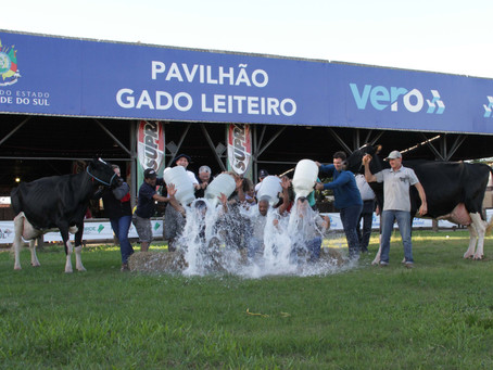 Tradicional Banho de Leite premia vencedores do concurso da Expoleite
