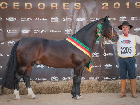 Cavalo Crioulo apresenta seus campeões da Expointer 2019