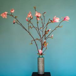 Magnoliasmars2021-2.jpg