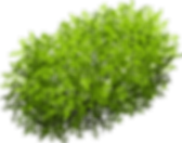 kisspng-tree-euclidean-vector-bush-carto