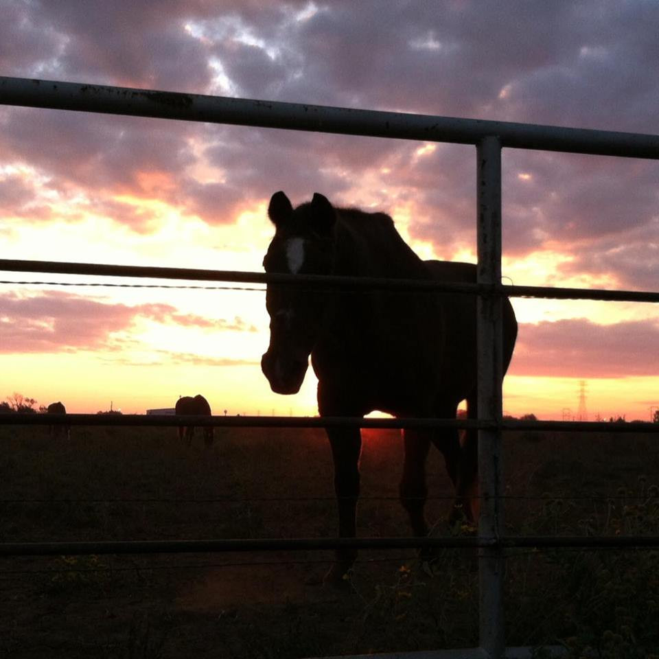 Horse standing in the corral at sunset