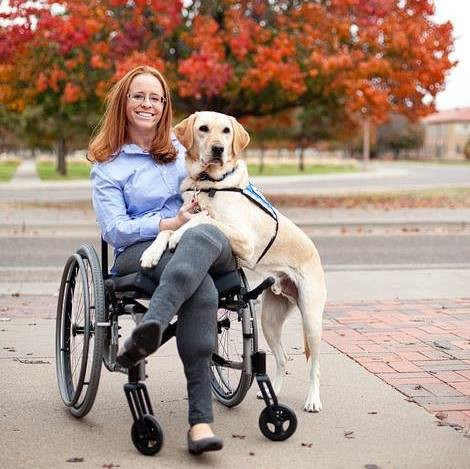 Woman in wheelchair with yellow labrator retriever guide dog