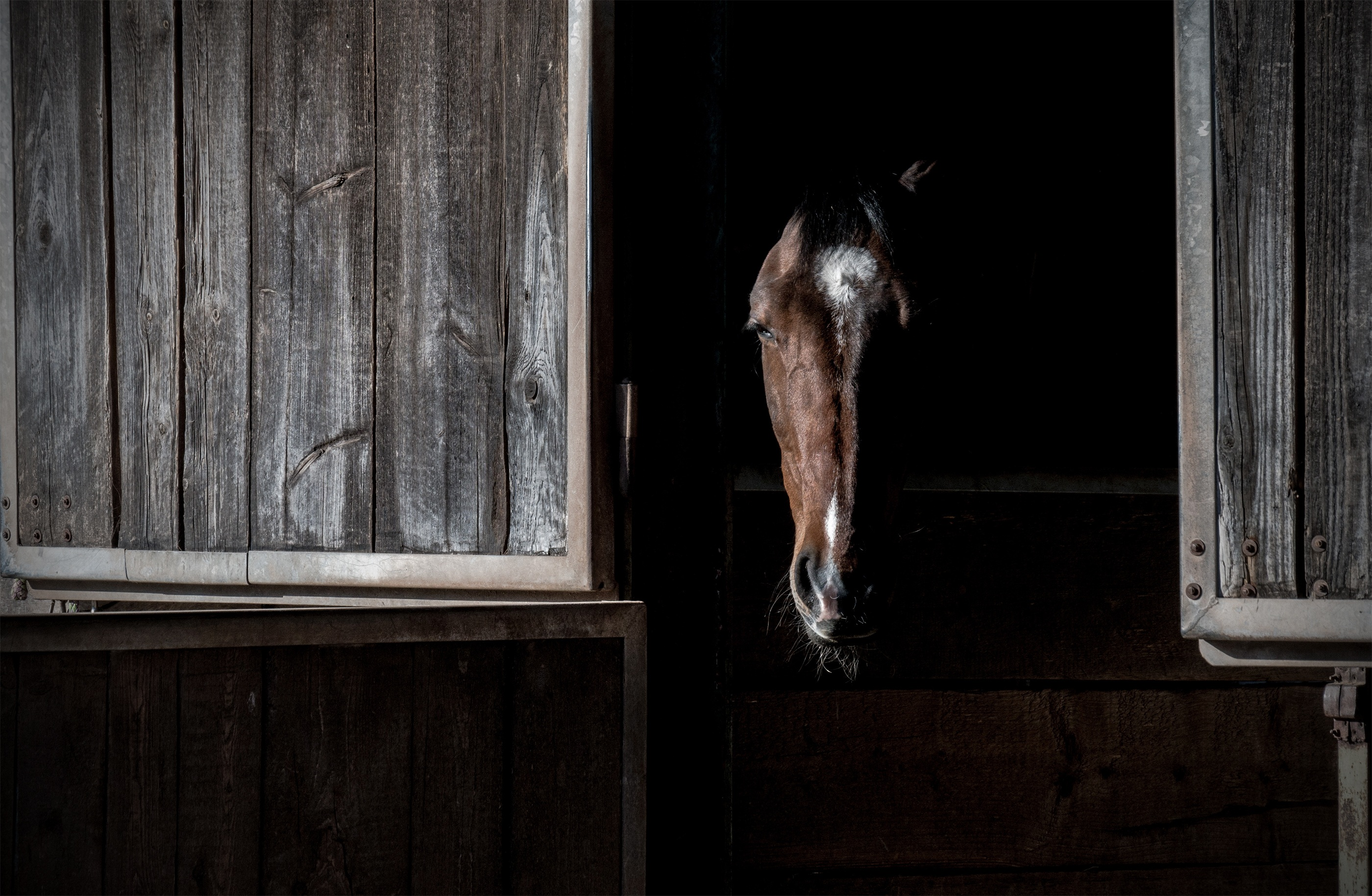 horse-2219364