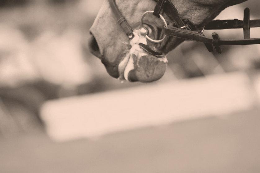 paard3_edited.jpg