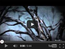 홀린(HLIN) - 기억나무숲