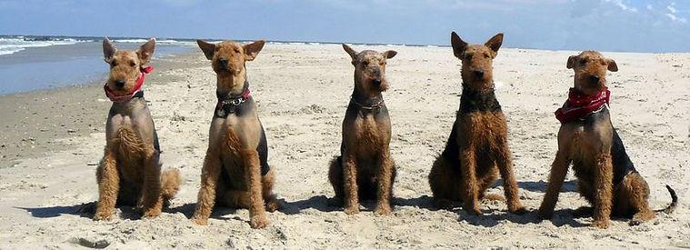 Kein Züchterfehler, sondern einfach eine steife Briese: (von links) Martha, Cilly, Kunigunde, Paloma und Motte