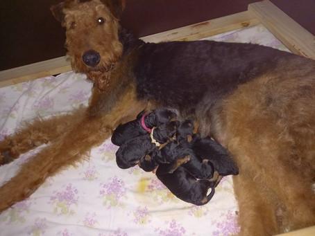 Whitneys Babys sind da!