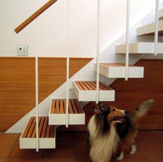 シェットランド・シープドッグと階段