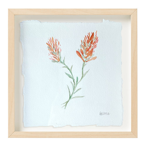 """Indian Paintbrush Watercolor"" 9x9"