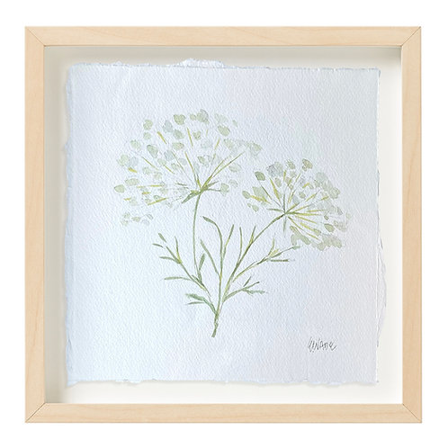 """Queen Anne's Lace Watercolor"" 9x9"