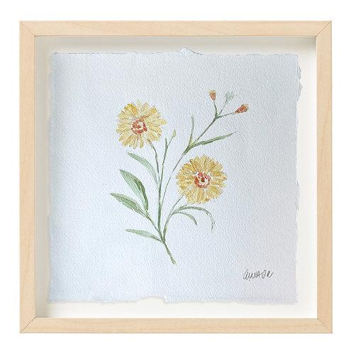 """Calliopsis Watercolor"" 9x9"