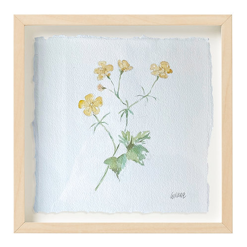 """Buttercup Watercolor"" 9x9"