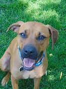 Rufus 2_edited.jpg