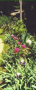 Spring Gardens.jpg