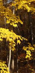 Yellow Landscape.JPG